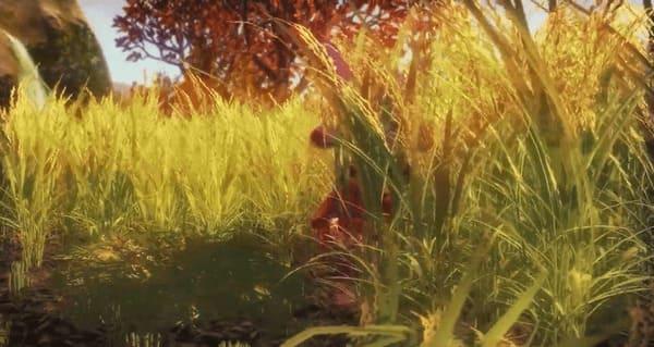 黄金色になった稲の画像